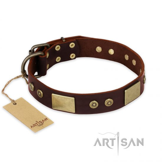 """Shining Armour"" FDT Artisan Brown Leather Newfoundland Collar with Decorations"