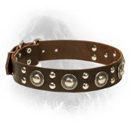 Designer Studded Leather Newfoundland Collar