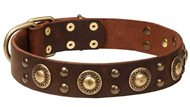 Leather Newfoundland Collar with Shining Brass Decorations