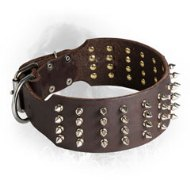 Extra Wide Leather Newfoundland Collar with Nickel Plated Spikes