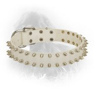 White Leather Newfoundland Collar with 2 Rows of Spikes