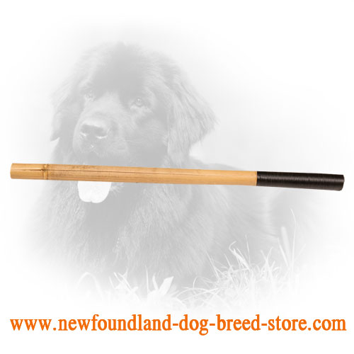 Newfoundland Stick for Schutzhund Training