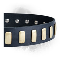 Brass Plates on Newfoundland Dog Leather Collar