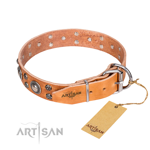 Everyday use genuine leather collar with adornments for your four-legged friend