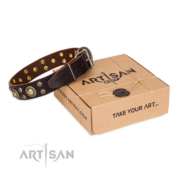 Incredible full grain genuine leather dog collar for everyday walking