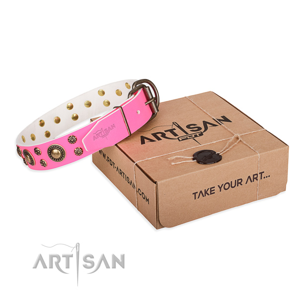 Full grain natural leather dog collar with studs for stylish walking