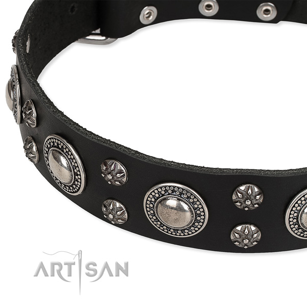 Snugly fitted leather dog collar with resistant to tear and wear non-rusting fittings