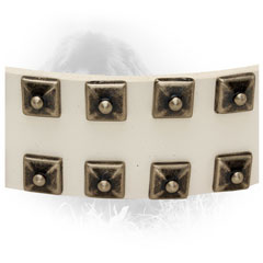 Silver-Like Studs on White Newfoundland Collar
