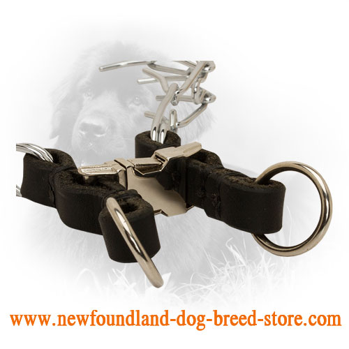 Quick Release Buckle on Chrome Plated Newfoundland Pinch Collar