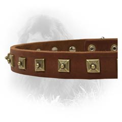 Newfoundland Modish Leather Dog Collar With Square  Studs