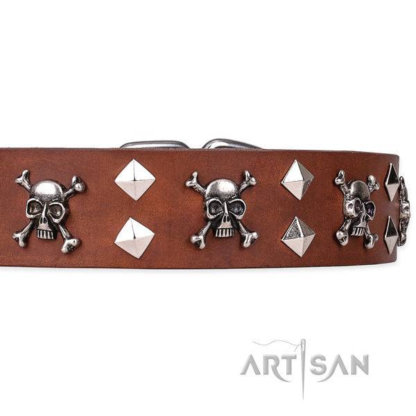 Daily leather dog collar with exciting adornments