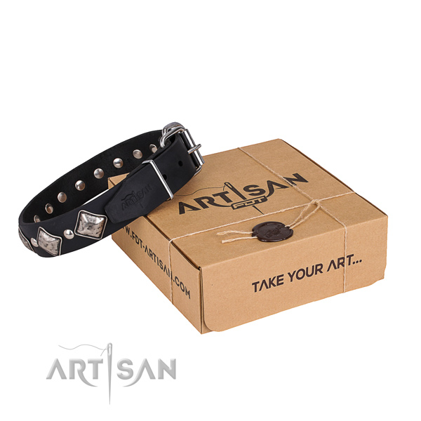 Daily leather dog collar with exceptional studs
