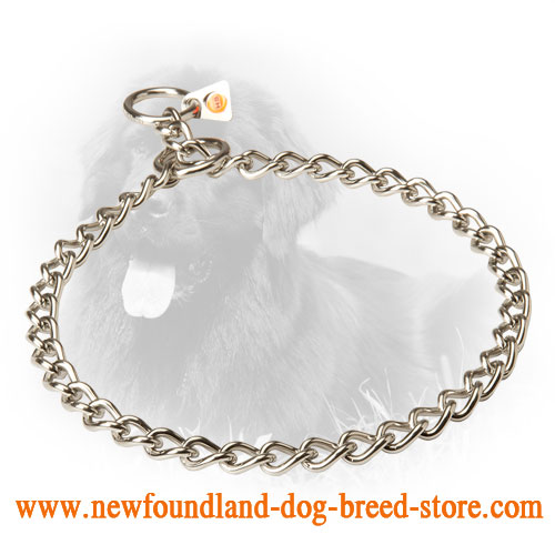 Newfoundland Choke Collar for Obedience Training
