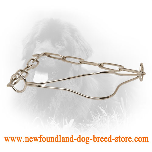 Chrome Plated Newfoundland Collar for Dog Shows