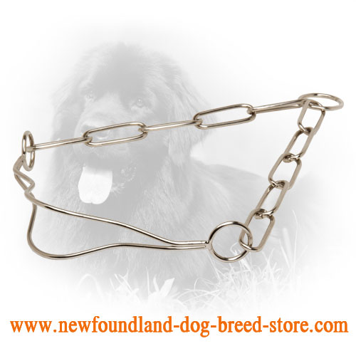 Chrome Plated Newfoundland Collar for Dog Shows with Fur Saving Links