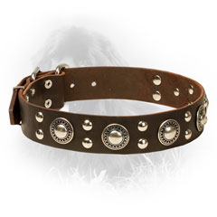 Leather Newfoundland Collar with Rustproof Studs