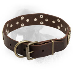 Leather Newfoundland Collar with Strong Brass Fittings