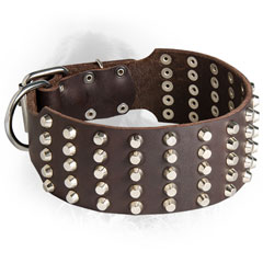 Leather Newfoundland Collar with Silver-Like Studs