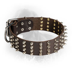 Newfoundland Collar with Nickel Plated Spikes