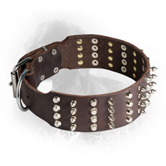 Newfoundland Collar with Nickel Plated Studs and Spikes