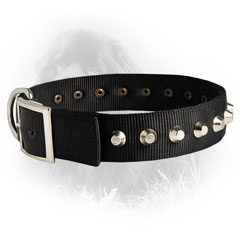 Newfoundland Dog Nylon Collar Massive Buckle
