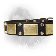 Leather Collar for Fashionable Dogs