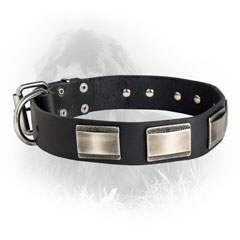 Newfoundland Dog Leather Collar Steel Nickel Plated Plates