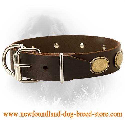 Best Collar For Newfoundland Dog