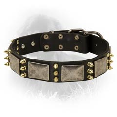 Fashionable Leather Collar for Newfoundlands