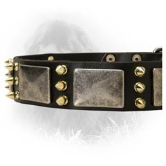 Leather Collar for Stylish Newfoundlands