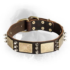 Original Leather Collar with Brass Plates and Nickel Spikes