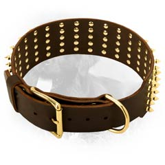 Leather Collar for Stylish Dogs