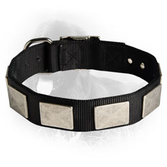 Newfoundland Nylon Collar Massive Nickel Plated Plates