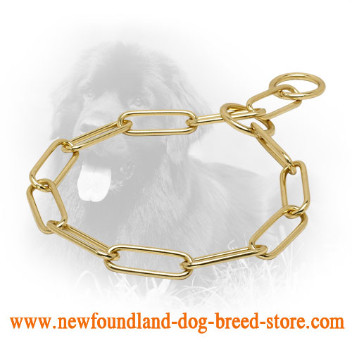 Durable Brass Newfoundland Collar with Fur Saving Links