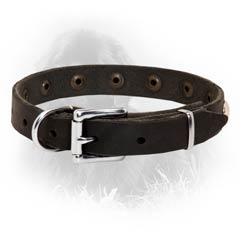 Newfoundland Leather Collar Special Nickel Buckle