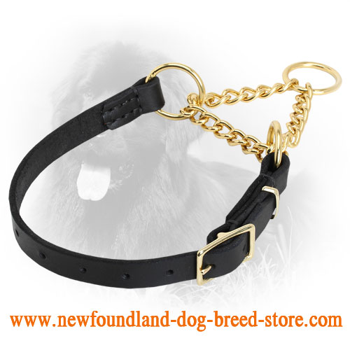 Brass and Leather Newfoundland Martingale Collar for Behavior Correction