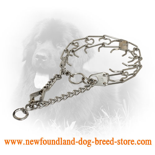 Chrome Plated Newfoundland Prong Collar for Training