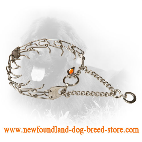Newfoundland Pinch Collar with Rustproof Prongs