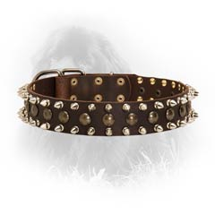 Stylish and Safe Newfoundland Leather Collar Spiked and  Studded