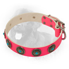 Pink Leather Newfoundland Collar with Solid Buckle