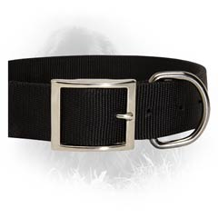 Incredibly Durable Newfoundland Collar From 2 Ply Nylon  And Nickel Plated Buckle and D-ring