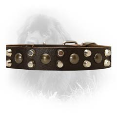 Newfoundland Fantastic Leather Collar with Studs and Pyramids