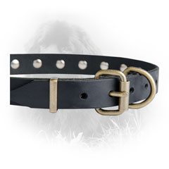 Steel Old Brass Plated Buckle on Newfoundland Leather Collar