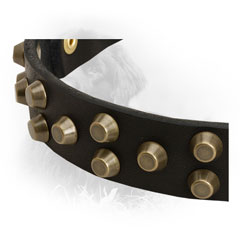 Leather Newfoundland Collar with Golden-Like Studs