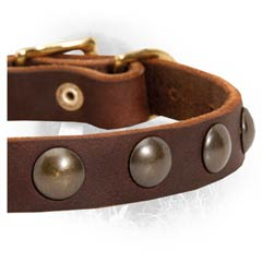 Rustproof Hardware on Newfoundland Leather Collar