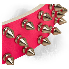 Nickel Spikes on Newfoundland Leather Collar Steel