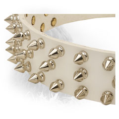 Nickel Spikes on Newfoundland Leather Collar