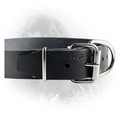 Nickel Buckle Newfoundland Leather Collar