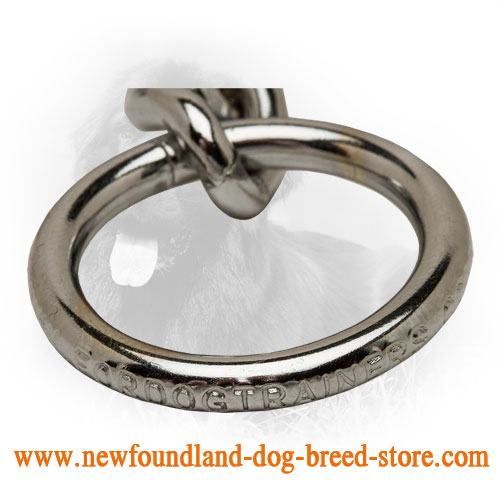 Solid O-Ring on Chrome Plated Newfoundland Choke Collar