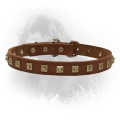 Newfoundland Dog Leather Collar For Walking And  Training in Style